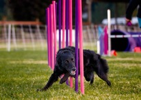 Building Verbals For Agility